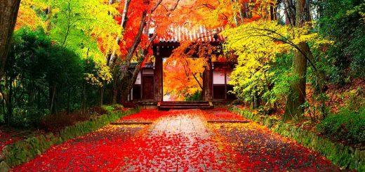 japanese-autumn-wallpaper-yvt2-jpeg-1376896818